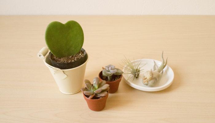 ナチュラルキッチンには、本物の植物もありますよ! お部屋にちょっと緑が欲しい時など、かわいい植物アイテムをナチュラルキッチンで探してみませんか!