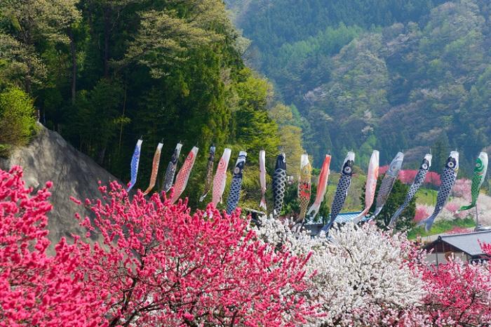 現在日本では5月5日の端午の節句では、鯉のぼりを飾り、兜を飾ります。しょうぶ湯に入り、ちまきや柏餅などを食べ、子どもの健やかな成長を喜ぶ節句行事となっています。また、国民の休日でありゴールデンウィーク中にある端午の節句。