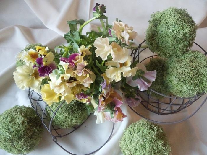 ご存知の方も多いパンジーです。和名は「三色スミレ」、露地に植えると非常に丈夫で、花が少なくなる10月~4月にお花を咲かせてくれる優れものです。日当たりが良ければ次々と花芽を上げてくれます。