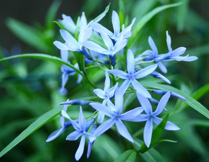 5月の花26選初夏に咲く花をご紹介 2ページ目 Lovegreenラブ