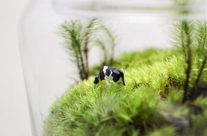 苔のテラリウムのQ&A 肥料はあげるの? 肥料は必須ではありません。  苔は光合成によって生育に必要なエネルギーを作るので、基本的には水だけで育てることをおすすめします。  容器のフタはずっと閉めたまま? フタは閉めたままで育てることができます。  苔は空気中の湿度を好みます。フタを開けると空気中の湿度が下がり乾きが早くなるので水やり時以外フタは閉めたままで育てましょう。ビンの中の水蒸気が過多になってしまった場合はフタを開けて調整してください。  メンテナンスは必要なの? 生長しすぎた苔はハサミで切り取ります。  縦に伸びてきてしまったら、ハサミでカットしましょう。カビが発生してしまった場合はその部分を切り取った後経過観察してみましょう。