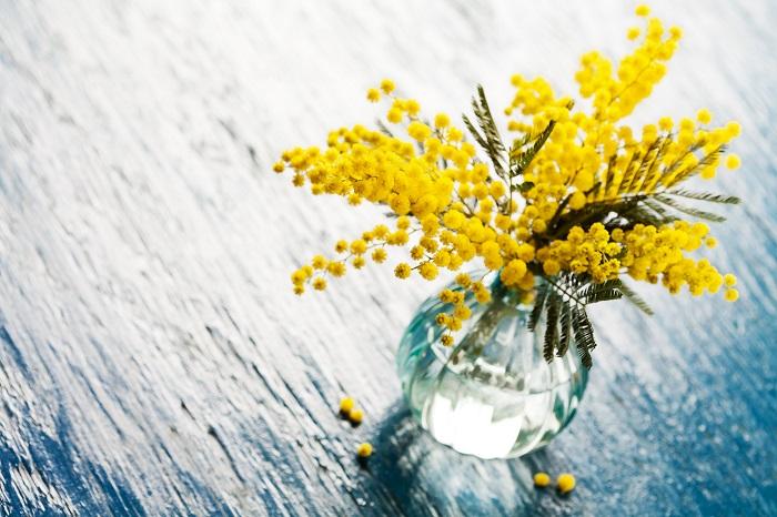 ミモザの花は本当に可愛らしく、いつまででも見ていたくなります。そんな可愛いミモザを花瓶に生けて自宅で楽しむコツについてご紹介します。    まず、切り花のミモザは水落ちしやすいので茎を斜めにカットし、水に浸かる分くらいの茎の表皮を剥ぐようにしてください。これはナイフで行えば簡単です。植物は道管だけでなくその表面からも水を吸収しますので、水の吸い上げが良くなります。