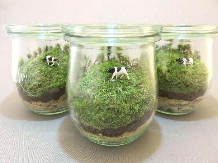 置き場所について ポイントは、直射日光の当たらない明るい室内に置くこと。  苔のテラリウムを高温の室内に長期間置いてしまうと苔が弱ってしまいます。特に春先から夏季に旅行などで家を空ける際は、なるべく涼しい場所で水を張ったボールにつけておく等して苔へのダメージを防ぐ対策をしましょう。  水やりについて 苔は根がない植物です。葉から水を吸いますので苔全体にかかるように与えましょう。ビンのまわりについた水滴を目安で苔にあったタイミングで水やりを行います。水分が多すぎるとビン内の湿度が上がり過ぎてしまい、生育不良の原因となるので注意。