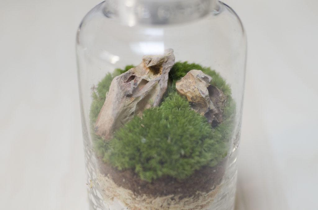 苔の配置 苔の向きを揃えると美しい芝生や草原を表現できます。石に沿って苔を置くとより自然な風景に。  初心者の方には口の広いビンがおすすめ はじめて作る方は、石などの配置せずに苔をメインに口の広いシャーレや薬ビンなどを使用して作成してみるのもおすすめです。  今回、使用している薬ビンはリカシツさんで取り扱っています。