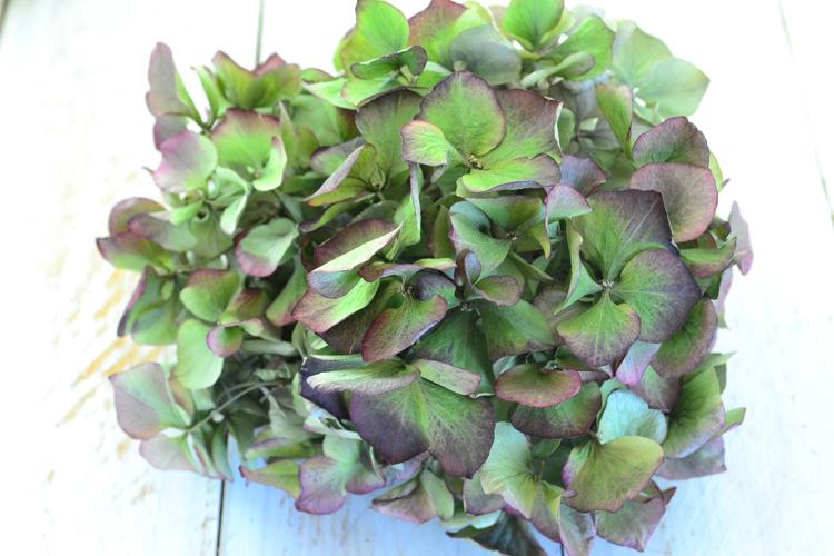 あじさいのドライフラワーは、ある程度の期間飾ることができるので、気軽に生活に植物を取り入れることができます。リースやスワッグ、アレンジの材料にもできますが、一輪だけ飾っても存在感のあるドライフラワーです。きれいな秋色あじさいが手に入ったらドライフラワーにしてみませんか。