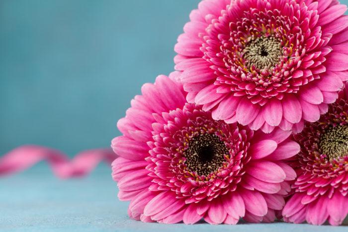お花屋さんでは一年中購入する事ができるガーベラですがガーベラの咲く季節は春と秋。  3月~5月、9月~11月頃となります。気候も良いこの季節に咲くガーベラは寒さと暑さが苦手。切り花を生ける際、気温の低い場所に置いた方がお花が長持ちするかもしれないとつい思いますがガーベラは気温が10度以下になると萎れてしまう場合があります。  茎がグリーンのまま傾いたように花びらも萎れた様子の場合は気温が低い証拠。ほんの少し気温の高い場所に移動をして一度水の中で茎を切り戻して生け直すと解消される事があります。  また真夏にガーベラを購入するとすぐに茎が腐ってしまう事があります。この場合は気温の高さと水の温度が上がっているので氷を2つ位入れてあげると解消します。その際は冷たすぎないようにお気をつけて下さいね。