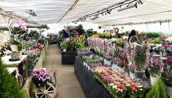 産直市場グリーンファームは広大な敷地の中に、産地直送の食品やビニールハウス2棟分の鉢植えや盆栽、生花のほか、動物と触れ合えるコーナーがありますが、骨董品の展示販売も大体的に行っています。骨董も生花も仕入れは一括でグリーンファームがとり行い、そこからセレクトするかたちで花と器 古道具 草の音さんで販売をされています。