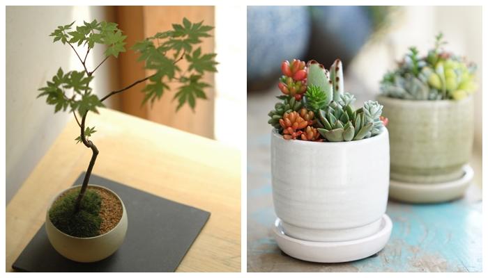 品品さんのインテリアに映える小品盆栽やTOKIIROさんの多肉植物の寄せ植え、Feelthegardenさんの苔のテラリウムの作成体験やリカシツのアロマ蒸留体験等を実施します。ワークショップだけでなく、CAFE SALVADORグリーンラウンジにて人気の講師の作品が展示販売もあります。