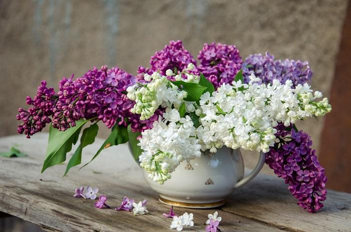こんなに魅力的なライラックのお花、買ってきてすぐにぐったりしてしまったのでは悲しくなります。ここでは、せめて少しでもライラックに長く可愛く咲いてもらえるようなコツをご紹介します。