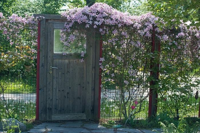 ラティスやトレリスなど格子につる性の植物を這わすと、緑の壁をつくることができます。花が咲いたり実がついたりする植物を這わせるとやさしい雰囲気になり、見た目にも楽しませてくれますよ。また、エスパリアウォールという植物を絡ませることのできるフェンスもあり、おしゃれに緑の壁を作ることができます。