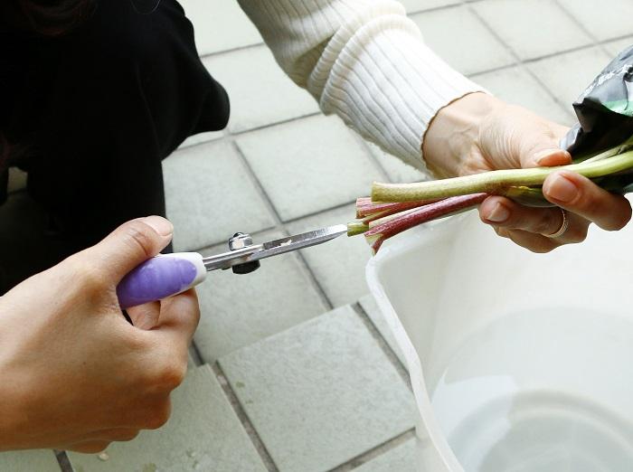 よく水を吸い上げられるように茎を十字にカットして・・・