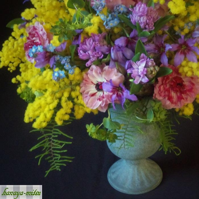 ミモザの愛すべき魅力は何よりもあのお花でしょう。明るい黄色のぽんぽんのような花を枝の先に房状に咲かせます。その姿は花というよりも、羽毛のような、果実のようなイメージを想起させます。葉の色は「銀葉」あるいは「シルバーリーフ」と言われる、銀色がかったグリーンです。淡く明るい黄色の花と銀葉のコントラストが美しく、その花の決して強くはない黄色は春の空の色ともよく合います。