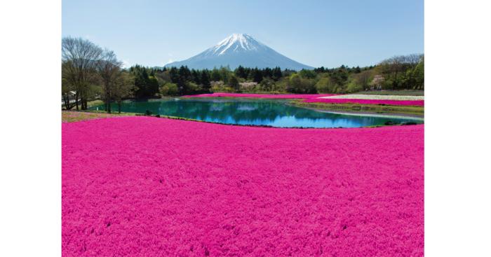 見渡す限りピンクの世界が広がる「ピンクの海」と、ピンクと白の芝桜でできた縁起の良い「紅白富士」。色鮮やかな芝桜の品種による「ピンクの海」では、幸福の色・女子力アップの色と言われるピンクに囲まれたフォトジェニックな写真を撮ることができる。またムスカリやアネモネ、ツツジ、クリンソウといった春の花々が会場を彩ります。