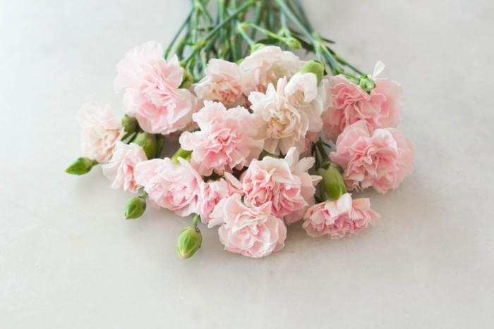 世界で古くから栽培されているお花のひとつであるカーネーション。キリスト教文化では、聖母マリアがイエス・キリストのために流した涙から地上に生まれたと信じられています。