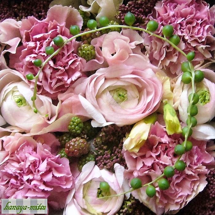 ラナンキュラス 学名: Ranunculus 科名:キンポウゲ科