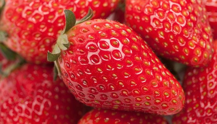 苺の旬は本来この時期です。俳句の季語でも苺は「夏」。路地物の苺は5月が旬ですが、現在日本ではクリスマスケーキ需要で出荷のピークは12月。苺農家も出荷に合わせてハウスでの生産になりますので、冬、1月ごろが「旬」というイメージになっているんですね。