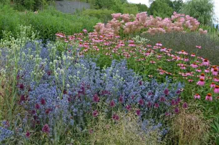 上野ファームの庭は、英国の庭作りから学びながらも、北海道の土地や気候を十分に生かした北海道ならではのガーデンです。  同じ植物でも、北と南では生長の状態が全く違います。寒暖差がある北海道ならではの花の色、大きさにみなさんもきっと驚かれることでしょう。