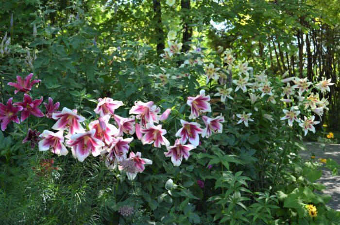 全長約50mの長い花壇です。曲がりくねった高低差のある凸凹な植栽が、リズミカルな風景を演出しています。