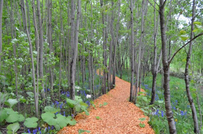 「ノームの庭」から「射的山」までを結ぶ散策路で、木立や木のトンネルをくぐり抜ける秘密の散歩道のようです。