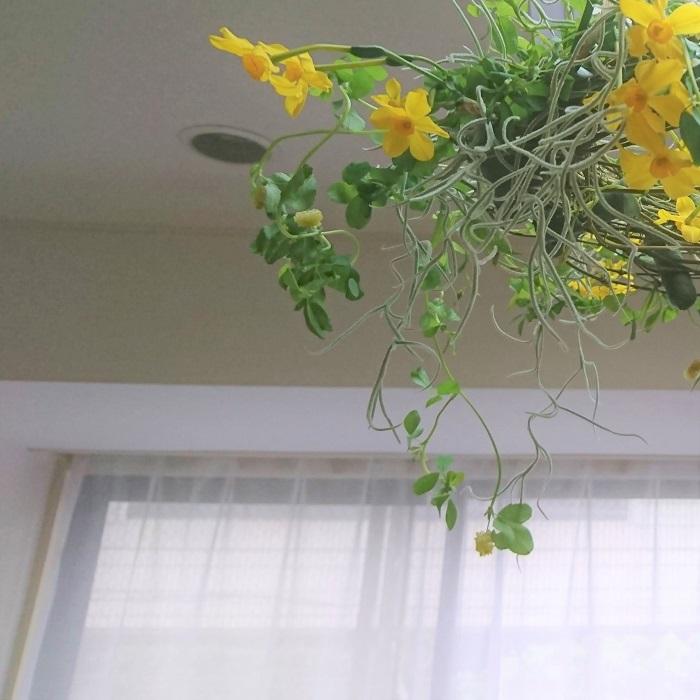 春のお花を使ったフライングリースの作り方をご紹介します。壁掛けリースと違って吊るして楽しむリースなので、動きのあるものや垂れる花材を選んで、いつもとは違う雰囲気を楽しみましょう