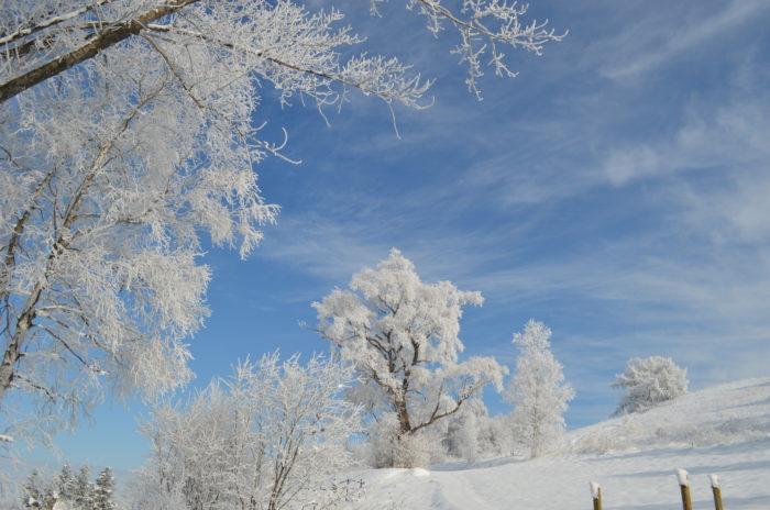 冬は雪景色を見ながら上野ファーム内にあるNAYA cafe'で食事を楽しむことができます。