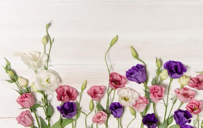 紫のトルコキキョウの花言葉は「希望」です。光沢のある絹織物を思い起こすような華やかで気品あふれる花の姿は、見ているだけで、花言葉のように前向きな気持ちになれます。