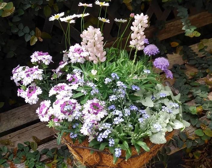 季節のお花を盛り込んで自分で作れば、世界で一つだけオリジナルのお母さんへのギフトに。寄せ植えにグリーンを入れても、爽やかな雰囲気になるのでおすすめ!