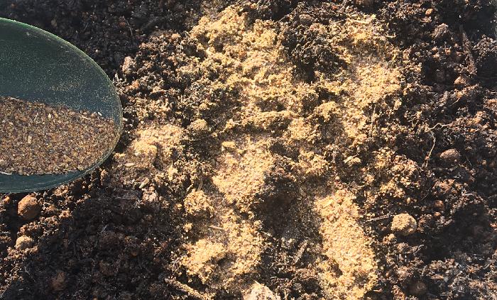 種まきや植え付けの2週間前に油かすを入れ、土によくすき込みましょう。