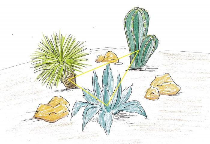 ドライガーデンづくりはレイアウトも大切です。ポイントは三角形を意識し、背の高い植物を後ろに配置すること。テレビや雑誌で見るような乾燥地帯の植物のようにぽつぽつとバランスよく間隔をあけると、雰囲気が出ておしゃれになりますよ。  3つの植物を、左右対称ではない少し崩した三角形に配置します。低いものは前、高いものは後ろにするとバランスが取りやすいです。