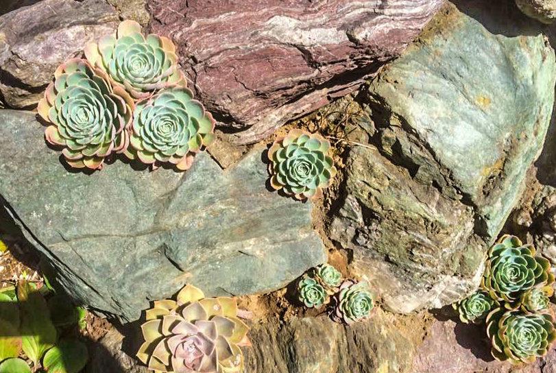 表情のある岩との組み合わせは、ドライガーデンの植物と相性バッチリ。乾燥地帯の植物の中で岩がアクセントになり、ワンランク上のおしゃれな多肉の庭が完成♪ もちろん、右ページで紹介している定番プランツとも組み合わせられます。スペースに合わせてレイアウトを楽しんでみましょう。