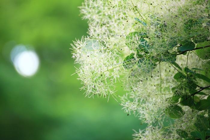 落葉樹は春から夏は葉を茂らせ目を楽しませてくれるほか、木陰を作って休む場所も与えてくれます。秋から冬には葉を落とし、下に生えている植物に日光が行き届くようにしてくれます。冬にはお日様をたくさん入れたいというお庭におすすめです。