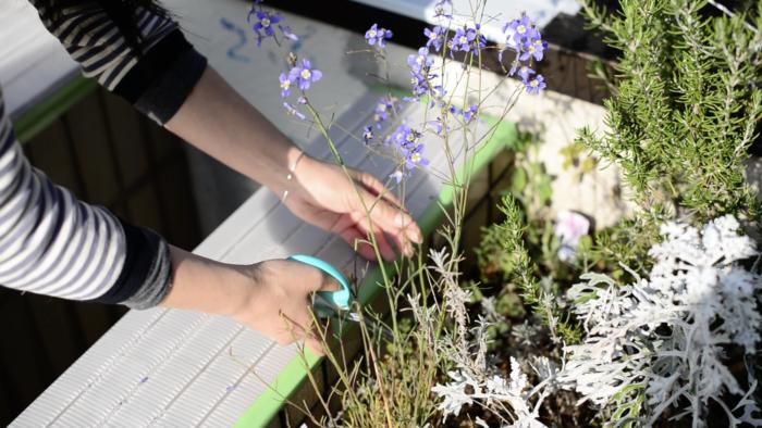 1.花を摘んでみましょう。  花はお庭を見渡して入れたいお花を選びましょう。  お花の選び方ですが、お庭にあるお花ならどんなお花でもかわいいブーケに仕上がります。  マスフラワー(面の大きな花)とフィラフラワー(小さなお花が集まる様に咲いている花)を合わると、よりバランス良く仕上がると思いますが、無い場合でも一緒に合わせるグリーンを花の形に合わせて小さな葉の物を合わせたり、大きめの葉の物を合わせたりすると全体が整ってきます。  背丈の低いお花しかなくても、大丈夫です。掌の中で包めるほどの小さなブーケもまた素敵です。  お水が入ったグラスなどを用意して、どのお花も摘んだらすぐにお水に入れるようにしましょう。
