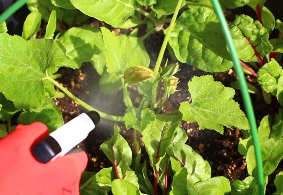 使用時は、作物全体・葉裏へ充分に散布する。プランターにかけても防虫効果がある。