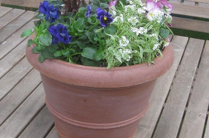プラスティック製は素焼きの鉢に比べて通気性や排水性が悪く、夏の暑さを逃してあげることもできず、植物にとってはあまり好ましい環境ではありません。しかし、排水性の良い土を使ったり、水やりのタイミングを工夫すれば植物を育てることはできます。  軽くて保水性があり、色や形が豊富で価格が比較的安いところがメリットです。  最近では素焼きに見えるようなプラスティック製の鉢も販売されているので、軽くて扱いやすい点を重視したり、多湿気味を好む植物を植える時に使うのもいいですね。