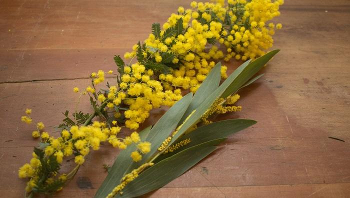 銀葉や笹葉とお花やさんによって置いてあるミモザの種類も様々なので、そこも楽しんで選んでもらえたら嬉しいです。  お花とはまた違うユニークな葉のフォルムなども見て、新しいミモザの発見からお気に入りの一つを家に持って帰る時に愛着が湧いてしまいます!