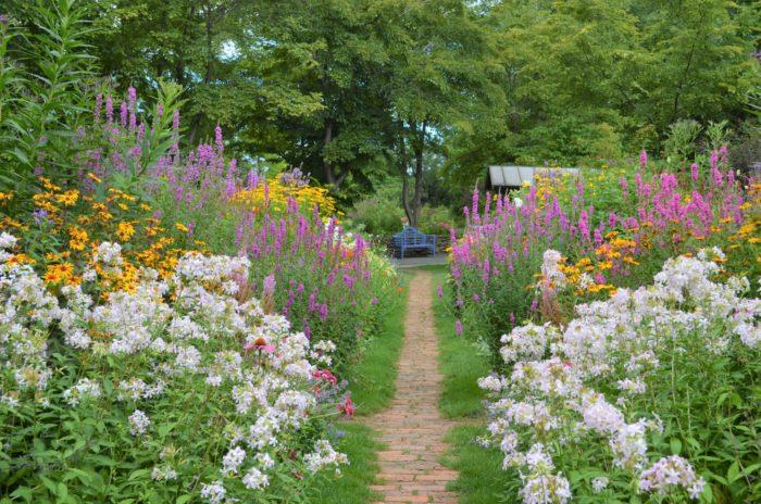 夏は、1年で1番庭が花であふれる季節です。