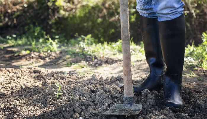 さて、いよいよ酸性に傾いた土壌を改良するために石灰を投入します。この時注意したいのは、くれぐれも消石灰や苦土石灰の入れすぎには気を付けるということです。  例えば、ジャガイモはアルカリ性に傾きすぎると「そうか病」にかかりやすくなります。極端な入れすぎには注意しましょう。  石灰投入の方法 1. スコップ・クワ・レーキを使って20~30cmほど土を掘り返します。  2. 通常の目安は1㎡当たり100g位の石灰を投入します。(pHを1上げたい場合、1㎡当たり150~200gの石灰を投入すると良いでしょう。)  突入する石灰の分量がいまいち分からない方は、有機石灰やもみ殻くん炭をおすすめします。有機石灰やもみ殻くん炭は多少入れすぎてもアルカリ性に傾きすぎることなく、それ以上は土壌中に溶け出さない性質を持っているので初心者の方に安心です。
