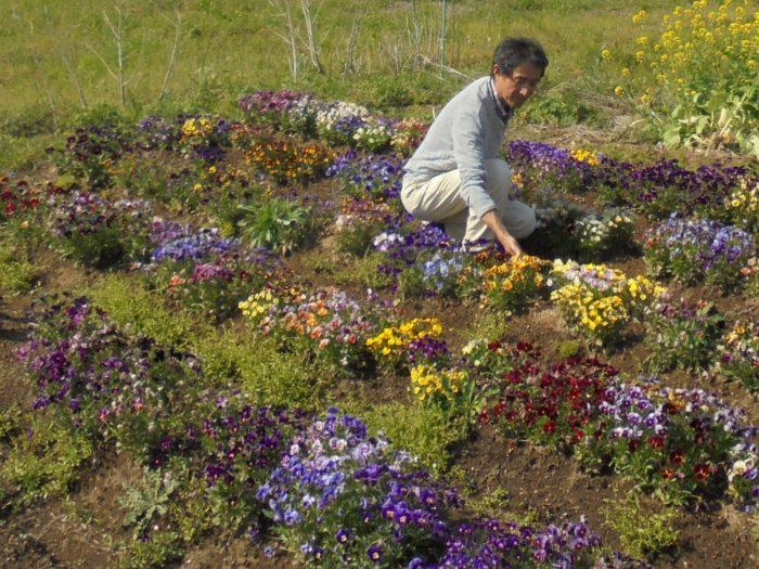 1961年宮崎市生まれ。平成3年頃より、パンジー・ビオラの育種に関わる。極々小輪系や細弁系(バニー)などの新しい花型を育成。また八重咲きの作出法の発見など、以降の日本のパンジー・ビオラに大きな影響を与える。現在は、後進の育成に取り組みながら、パンジー・ビオラの魅力を執筆や講演などで発信している。