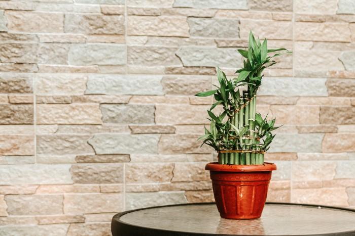 ミリオンバンブーは、開運や金運を呼ぶ木として、風水では有名な観葉植物です。幹が竹のように見えるため、富貴竹や開運竹、萬年竹とも呼ばれます。何本もの竹を組み合わせ格子状に仕立てたり、様々な形のものがあります。