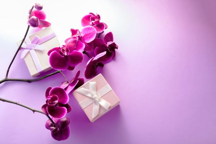 ランの中でもひときわ優雅なコチョウラン。色も多彩で、お祝いに贈るお花として、定番のイメージが定着しています。