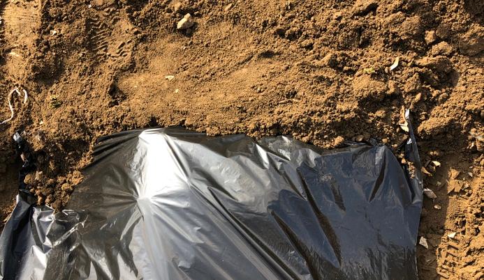 7.  マルチの端を土でしっかり固定するように埋めましょう。