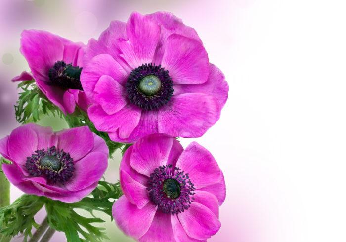 卒業」や「退職」、「門出」にぴったりな花言葉を持つ花   LOVEGREEN ...