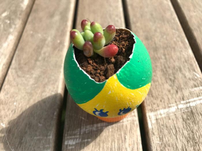 4.たまごの殻に多肉植物をバランスよく植え込む。植え方は切り口が土に少し埋まるくらいで大丈夫です。