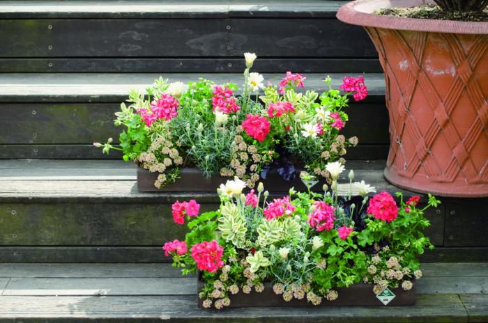 春にはたくさんの花があるけれど、どれを選んだら良いか分からない、というビギナーさんにおすすめしたいのがゼラニウム。花期が長く、色や品種も豊富。寄せ植えにも