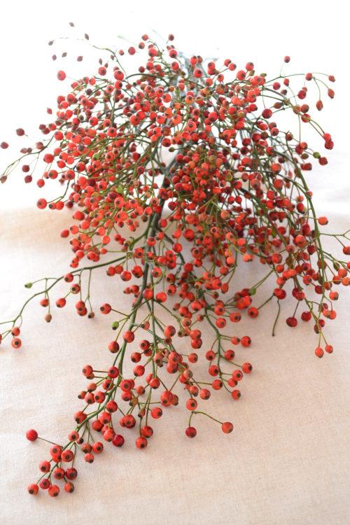 秋に切り花として流通する野バラの実。丈の短いサイズから、1m以上ある枝ものまで様々なサイズが流通しています。丈の長い野バラの実は、切り花として買ってきてすぐに丸めれば、簡単にリースにもなります。秋からクリスマスごろまで流通しているので、クリスマスの花材としても利用されます。簡単にドライフラワーになります。