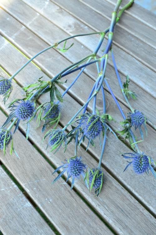生花の状態からカサカサとした質感のエリンジウム。夏に出回る切り花で、ドライフラワーになりやすい花です。さわやかな色とユニークな花の形でドライフラワーの素材としても人気があります。花丈があるのでスワッグなど丈が必要なドライフラワーの飾り方にも使えます。ドライフラワーになっても、きれいに青い色が残ります。