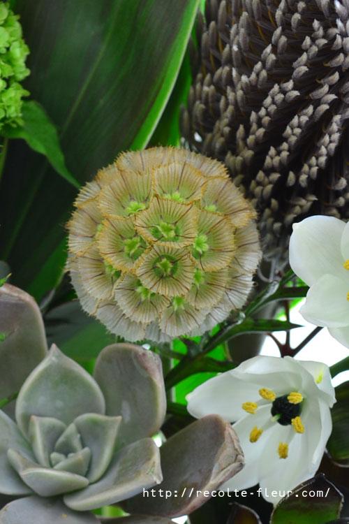 ステルンクーゲルはスカビオサの花の後の実です。ボール状のかわいい形で、カサカサした触感。簡単にドライフラワーになる花です。