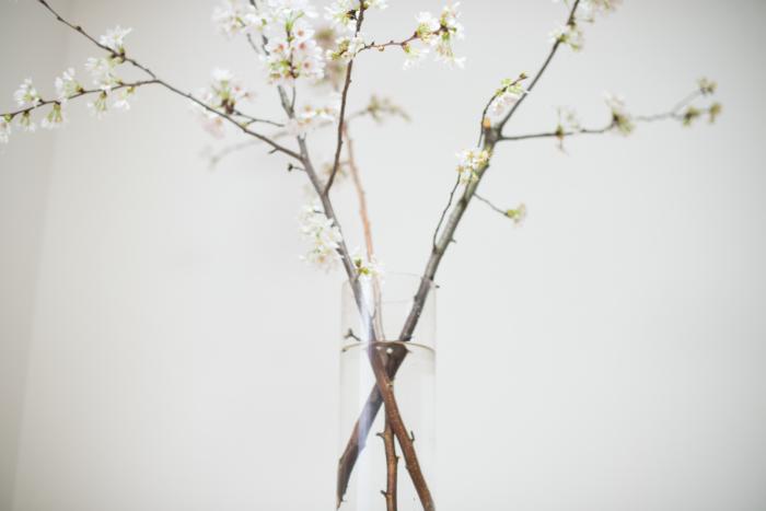 1.桜の枝は枝の1/3がお水に浸かるようにお水を準備します。 2.枝は裂くようにハサミで割ります。割ると水に触れる面積が広くなり、水がより吸いやすくなるためです。枝は自然に花瓶に傾けるように生けてみましょう。