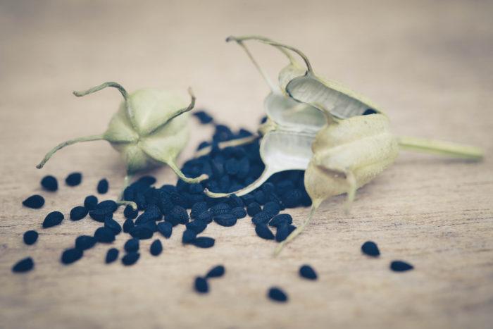 切り花やガーデニングで一般的に知られているニゲラ(クロタネソウ)。  ハーブとしてカレーのスパイスに使用されるニゲラは、姿は良く似ていますが園芸で使われているニゲラとは別の「ニオイクロタネソウ」という種類です。  花びらのようなガクが散った後にバルーン状に膨らんだ果実の中から黒い種を収穫し種子がスパイスになり「ブラッククミン」と呼ばれています。  ハーブとしての呼び名は他にもあり、ローマンコリアンダー、ブラックキャラウェイ、オニオンシードなどと呼ばれます。種子はスパイシーでフルーティーな風味で、中東諸国ではお菓子やパンの香りづけに使われているようです。刺激が強い為、使用の量には加減が必要です。  ハーブとしてのニゲラ(ニオイクロタネソウ)の栽培は古代エジプト3,300年まで遡ります。  ブラックシードのオイルはツタンカーメンの埋葬室でも発見されたと言われていて、その歴史の深さと貴重なスパイスや薬用として現在まで大切にされてきた事が伺えます。  日本に入って来たのは、大正初期に渡来し、当初は野菜として栽培されていました。
