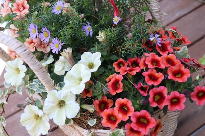 最近、母の日に寄せ植えを贈る方が増えています。  器に何種類かの植物を集めて植えてある寄せ植えは、ひとつあるだけでミニガーデン。育てる楽しさも丸ごとプレゼントできます。植物を育てる事が好きなお母さんにぴったりです。